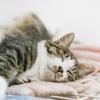 【体にまつわる話】睡眠改善 - 寝る前のヨガと呼吸法
