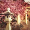 河津桜を見に行きました☆幸せな側面を見出す。