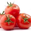 イタリアの夏と言えば「ポモドーリ」の収穫! トマト缶製造シーズンです!!! その4