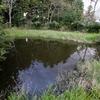 蓮池(岩手県遠野)