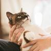 猫は3年の恩を3日で忘れる?別れた飼い主の声と対面した猫の反応がスゴイ