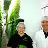 アメリカの植物工場、大きめサイズのリーフレタスを4ドルで販売