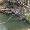 『東ノ谷池』静岡県掛川野池群バス釣り完全攻略マップ
