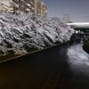 疎水沿いの桜と近鉄電車