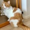 どうやら猫にも「休日」という概念がある様子。