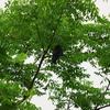 2017年6月10日 大坂府枚方市付近の淀川の野鳥写真
