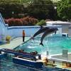 しながわ水族館でショー・・・・そしてテルマエ・ロマエ II