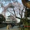 開幕!弘前桜祭り 5(天守閣)