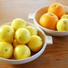 季節の果物でシロップ作り/湘南ゴールド×ネーブルオレンジ×レモン
