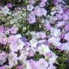 草原ポタジェ化計画 ~インカのめざめ、ついに収穫~