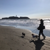 【湘南・江の島】犬連れにおすすめのルート、犬同伴OKなレストラン-魚見亭、Transparente、Cafe Madu、犬が宿泊できる旅館