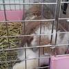 うさぎ ウサギの足&ケージガリガリ