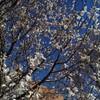 春が来たー!