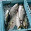 午後の休日に魚をおろす…