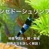 シャドーシュリンプの特徴や飼育方法・混泳・餌・繁殖を詳しく解説!