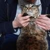 「オレはおまえらの父親じゃないんだぞ」と愛猫に向かって言う夫