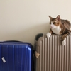 ハネムーンと海外旅行保険について