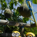 遊遊時々農業