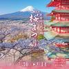 3月30日から富士吉田の新倉山浅間公園で桜まつりが始まりますよ