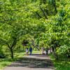 佐倉城址公園とくらしの植物苑  @千葉県佐倉市