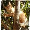 茶トラ猫の冒険 航海?登山?
