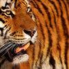 猛虎が執念を燃やす!阪神タイガース優勝に必要な課題