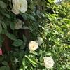 古い小屋の庭