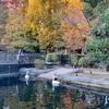 旅行気分で歩く、秋の吉祥寺 井の頭公園と自然文化園