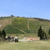 滋賀県「びわ湖バレイ」スイセンの丘
