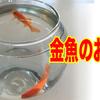 【緊急事態】金魚のお世話はこうする!娘と金魚の物語