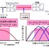 浅草肝腎腸(かんじんちょう)の作用メカニズム