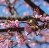 DA★60-250で新宿御苑の鳥撮りに挑戦