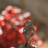 薪割りをしているとやってくる鳥が・・・