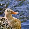 LUMIX GM1と100‐300mmで公園の野鳥などを撮影した