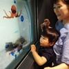 アンパンマンの映画と水族館
