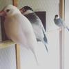 萩荘改めHAGISO カフェ宿ギャラリー