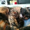 【猫ブログ】プルさんの怪我を観察中。