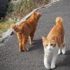 何色の猫が好き?田代島