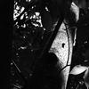 OLYMPUSのコンデジ 「XZ-10」で2017年6月26日までに撮影した写真を紹介します。イガグリがなっていました