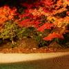【kogasanaの写真素材集】紅葉ライトアップ・神戸ルミナリエまとめ