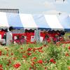 下妻市ネットワーカー等連絡協議会が花とふれあいまつりに参加しました。(平成25年5月19日)