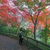 狭山公園で、紅葉狩りをするつもりだったが。