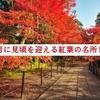 【保存版】添乗員が厳選する11月に見頃を迎える紅葉の名所7選!