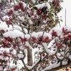 九州も大雪です