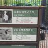 上野動物園のニホンコウノトリ