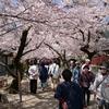 秋月久留米桜の名所ツーリング