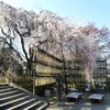 【京都】【御朱印】『大石神社』に行ってきました。 桜 京都観光 京都旅行 女子旅 京都桜