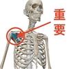 【ベンチプレス】ベンチが胸に効かない?必ず行うべき肩甲下筋のケアとは?