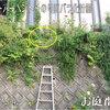 2011/06/04 ゾンマーアーベント 生き残っていた!