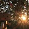 美瑛町 千代田の丘付近から見た夕日